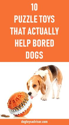 Is your dog bored? Here are 10 Interactive Puzzle Dog Toys that give him mental stimulation and relieve boredom. They also help to keep your dog busy while you're at work. Dog Puzzles, Puzzle Toys, Dog Enrichment, Brain Games For Dogs, Dog Gadgets, Boredom Busters, Belgian Malinois, Dog Toys, Dog Training