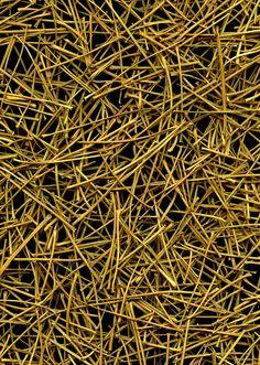 52200 Ginkgo biloba by horticultural art, via Flickr
