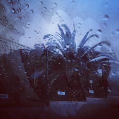 rainny palmtree