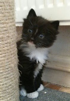 black and white ragdoll cats E978rlaT