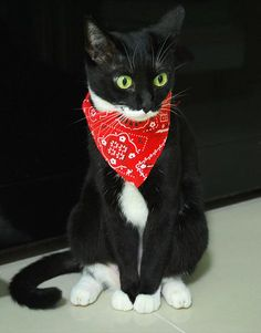 Bandit Cat Scarf Bandana Collar