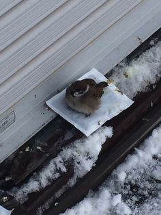 Sparrow Getting Some Warmth