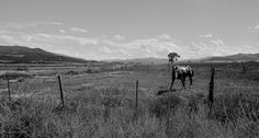 A fussy horse near Eagle, Colorado