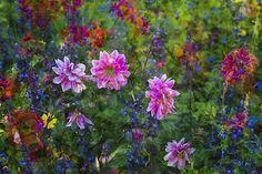 Flora Plenteous 35 Flora, Plants, Plant, Planets