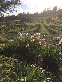 Hunter Hill Vineyard & Winery Santa Cruz California wine tasting