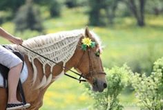 Horse with braided mane. ** Never seen this type of plaiting on a horse before.