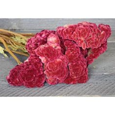 @curiouscountry posted to Instagram: Continuing our RED tour with Burgundy Celosia Coxcomb flowers!  These are truly unique flowers with such a cool fuzzy texture. You will love what they add to your dried flower arrangements, bouquets, wreaths or centerpieces. #coxcomb #burgundy #floraldesign #driedflowers #homedecor #decoration #livingroominspiration #livingroominso #diyhomedecor #decorating #decorideas #homestyle #decoratemyspace #naturaldecor #flowertour #homedesign #redflowers #red #diycraf