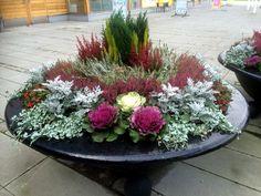 Winter plants can also be nice - Bepflanzung Shade Garden Plants, Garden Pots, Small Gardens, Outdoor Gardens, Amazing Gardens, Beautiful Gardens, Fall Containers, Winter Plants, Pot Plante