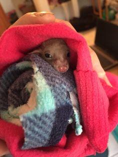 Bat in rehab