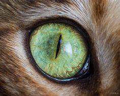 os mais belos olhos da natureza - Pesquisa Google