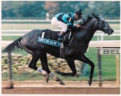 Spectacular Bid - 2.7 million dollar earner. Foaled in 1976, he won the Kentucky Derby and Preakness, and 26 out of 30 races.