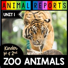 Zoo Animals - Animal Research Reports - Kindergarten and First Grade Non-Fiction, Nocturnal Animals, Zoo Animals, Kindergarten, Summer Science, Pet Tiger, Animal Habitats, Toddler Learning Activities, All About Animals, Animal Books