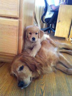 Awww so cute!