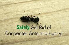 Safely eliminate an infestation of carpenter ants in your home in a hurry with no call to pest control and no pesticides in your home.