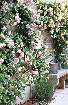 Small Cottage Garden Ideas, Garden Cottage, Small Courtyard Gardens, Small Gardens, Amazing Gardens, Beautiful Gardens, Beautiful Farm, Olive Garden, Flower Garden Design