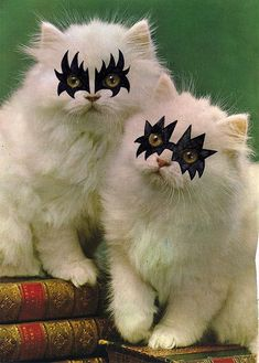 They want to Rock and Roll all night, and Party every day. Cute Cats And Dogs, Cool Pets, Cats And Kittens, Baby Animals, Cute Animals, Animal Fun, Funny Animals, Animal Pictures, Cute Pictures