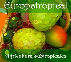 Enlace página Agricultura de Subtropicales