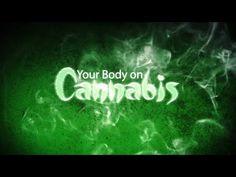 Cannabinoid Profiles - THC, THC-A, THC-V, CBD, CBG, CBN, CBC & Terpenes - YouTube