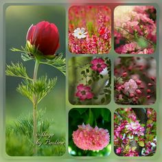Color Collage, Collage Design, Mood Colors, Beautiful Collage, Color Meanings, Collages, Photo Wall Art, Spring Blooms, Photoshop Elements