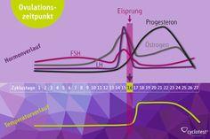 Was weißt Du eigentlich über Deinen Zyklus? Wir haben das komplexe Geschehen im weiblichen Zyklus veranschaulicht und erklären Dir, was die hormonellen Veränderungen in Deinem Körper bewirken.