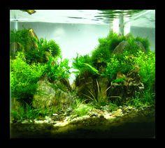 nano aquascaping germany | little nano from VietNam | AquaScaping World Forum