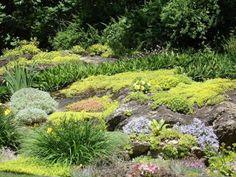 jardin de rocaille avec une basse végétation