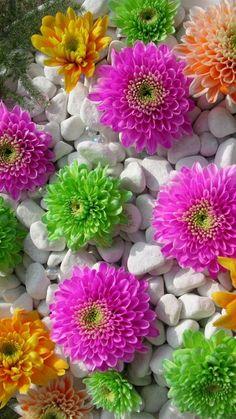 iPhone Wallpaper HD Flower | Best HD Wallpapers