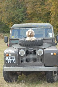The latest thing in pet protection from Land Rover Short Dog, Best 4x4, Cars Land, Off Road, Expedition Vehicle, Land Rover Defender, Range Rover, Dog Life, Vintage Cars