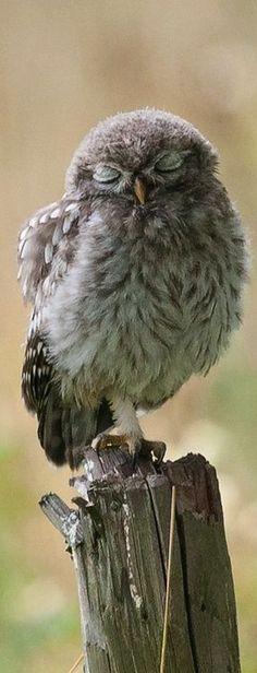 Proč ta sova tolik houkala,hů a hů a hů,na mě se tak divně koukala hů a hů a hů...