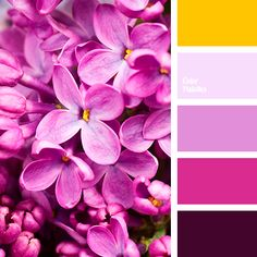 Yellow and purple florals color scheme