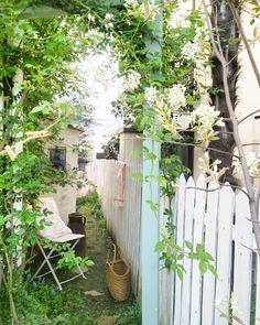 """""""お庭の小路のバラのアーチ!葉が沢山出てきてました♪  ジューンベリーのお花も咲いて少しずつ華やかになってきて、意味もなく狭いお庭を行ったり来たり。。♪ * #おうち#お庭#ガーデン #マイガーデン#ガーデニング #バラ#バラの葉#ジューンベリー #お花#小屋 #くらし#花のあるくらし…"""""""