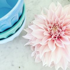 #dahlia #anthro #bowls #flower #homestyle #flowerpower #flower