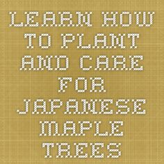 Learn how to plant and care for Japanese Maple Trees
