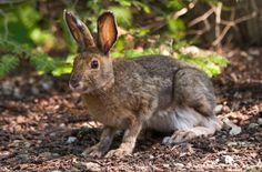 Rabbit Tracks and Sign
