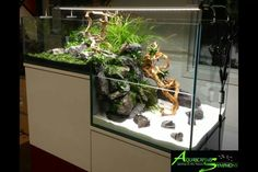 Bi-level Vivarium. I LVOE l shaped tanks! there is just so much room to play with
