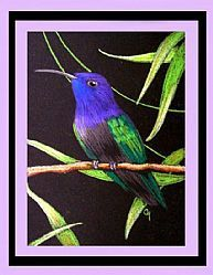 Art: Purple-throated Hummingbird by Artist Cyra R. Cancel