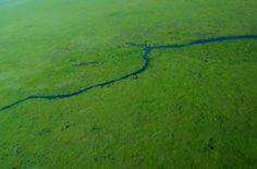 Fotos de Esteros del Iberá: fotos y paisajes del litoral argentino