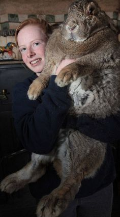 Ralph Is Worlds Biggest rabbit!!! Jesus!!! That's one big bunny!!!!!