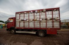 Banksy's installation Silence Of The Lambs was casually carted through the farm in a kind of warm-up act