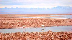 Salar de Atacama, Reserva de Flamencos