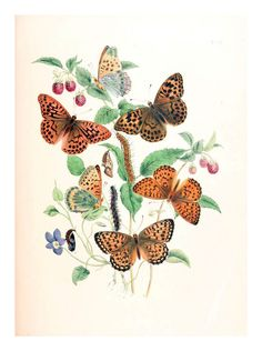 mariposa2 | by ayacata7