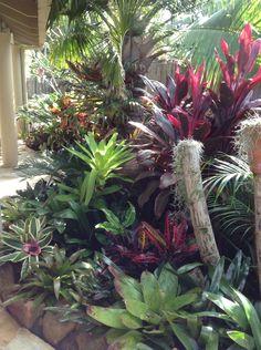 My bromeliad garden - tropical garden ideas Tropical Backyard Landscaping, Tropical Garden Design, Landscaping With Rocks, Tropical Plants, Tropical Gardens, Bali Garden, Balinese Garden, Small Gardens, Outdoor Gardens