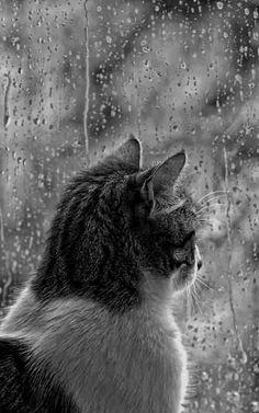 I am sitting watching the rain. Life is grand - when you can actually have time to enjoy a rainstorm cat / kitty / rain / mood / lovely / window / fur / light / black and wite / photograhy