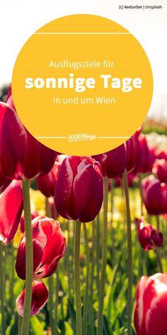 Die Sonne zieht uns in die blühende und grünende Natur, verbunden mit dem einen oder anderen kulinarischen Schmankerl. Welche Ausflugsziele in und um Wien sich für sonnige Tage besonders gut anbieten, präsentieren wir euch hier. Vegetables, Sunny Days, Road Trip Destinations, Sun, Nature, Nice Asses, Vegetable Recipes, Veggies