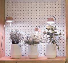 Cynara LED light for indoor gardening by Bulbo