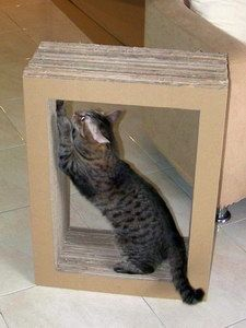 DIY cardboard cat scratcher (link doesn't work, but image is self-explanatory) #outdoorcattoys
