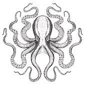 Find Octopus Hand Drawn Sea Monster stock images in HD and millions of other royalty-free stock photos, illustrations and vectors in the Shutterstock collection. Octopus Drawing, Octopus Art, Tattoo Knee, Octopus Illustration, Petit Tattoo, Octopus Tattoos, Tattoo Removal, Sea Monsters, Sea Creatures