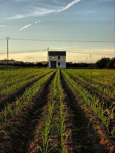 Las casita y las cebollas - Massalfassar (Spain) © Paco Mollá 31-10-12_14 Railroad Tracks, Onions, Country, Pictures, Train Tracks