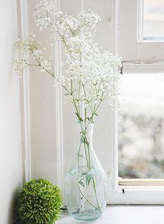 gypsophila (baby's breath) - symbolises 'purity of heart' Ikebana, White Flowers, Beautiful Flowers, Babys Breath Flowers, Deco Floral, Flower Aesthetic, Gras, Flower Vases, Table Flowers