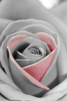 Une riche palette de couleurs affiche le changement rose fleurs un miracle!